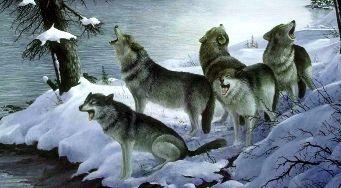 Серые волки против бригады буровиков