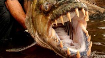 Сезон экстремальной рыбалки на Discovery