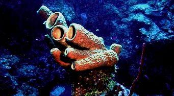 Подводный мир Аватара 2