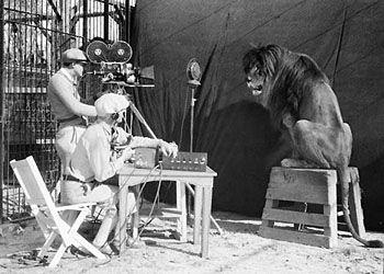MGM съемки льва